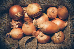 Rustic Onions Stock Photography