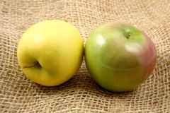 Rustic pair of apples yellow and green Royalty Free Stock Image