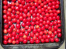 Rustic pan of fresh cherries Royalty Free Stock Photo