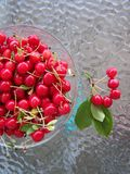 Fresh cherries picked Royalty Free Stock Image