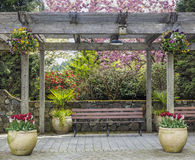 Rustic pergola with bench and flower pots under blossoming cherry tree. In the spring Stock Images