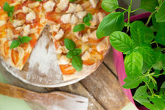 Rustic pizza topped with fresh basil leaves Royalty Free Stock Image