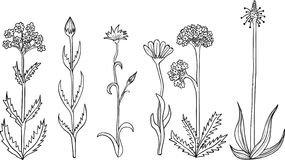 Rustic plants and flowers. Hand drawn set. Stock Images