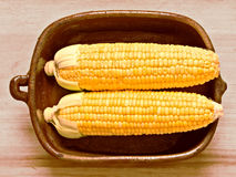Rustic raw uncooked golden corncobs Stock Photography
