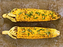 Rustic roasted corncob Royalty Free Stock Images