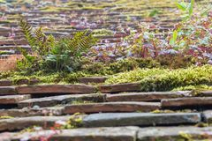 Rustic roof with ferns and moss growing between and on top of the tiles Royalty Free Stock Image