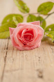 Rustic rose Royalty Free Stock Photos