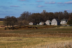 Rustic Rural Iowa Farm. Old rustic farm in Northern Iowa with cattle Royalty Free Stock Images