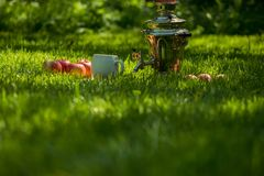 Rustic samovar steel teapot on the fresh spring summer lawn serve with the wooden board and apples and cup. Picnic leisure vacatio. N holidays Royalty Free Stock Photos