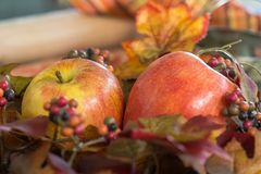 Fall Baking with Apples. A rustic scene with apples and fall foliage, all the colors of the season stock photo