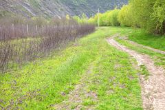 Country road. Rustic scenery with country road through the grassland Stock Photos