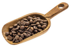 Rustic scoop of coffee beans Stock Images