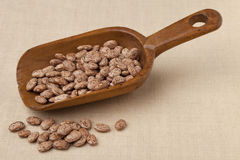 Rustic scoop of pinto beans Royalty Free Stock Image