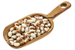 Rustic scoop of yellow eye bean Stock Image