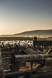 Rustic Sheep pen Stock Photos