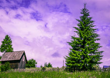 Rustic small barn and tall pine tree Royalty Free Stock Photos