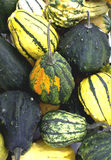 Rustic squash background Royalty Free Stock Images