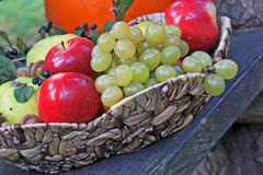 Rustic still life with harvest fruits Royalty Free Stock Photo
