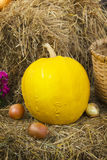 Rustic still life with pumpkin Stock Images