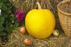 Rustic still life with pumpkin Royalty Free Stock Photos