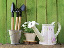 Rustic still life watering can, flowers in pots Royalty Free Stock Photo