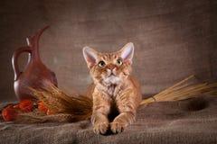 Rustic style cat Stock Photo
