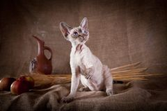 Rustic style cat Stock Image