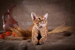 Rustic style cat Stock Photos