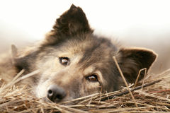 Rustic style  a dog asleep Stock Images