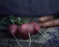 Rustic style. Fresh Radishes on the wooden table. Rustic style misticlight. Fresh vegetable on the wooden table. Radishes carrot and potato Stock Photography