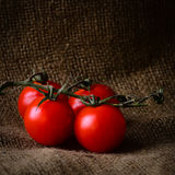 Rustic style fresh tomatoes on the vine Stock Photography