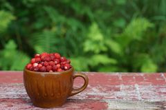 Rustic style mug filled with red strawberries, stands on shabby, faded boards in the garden in summer.  stock photos