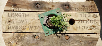 Rustic timber with plant Royalty Free Stock Images