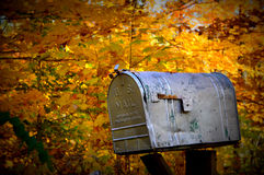 Rural Mail Box. A rustic US Mail box against some brilliant yellow, golden colored trees in the fall Royalty Free Stock Photos