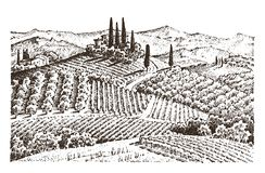 Rustic vineyard. rural landscape with houses. solar tuscany background. fields and cypress trees. harvesting and. Haystacks. engraved hand drawn in old sketch Royalty Free Stock Photography