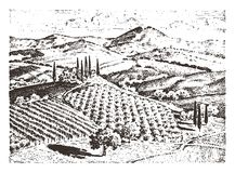 Rustic vineyard. rural landscape with houses. solar tuscany background. fields and cypress trees. harvesting and. Haystacks. engraved hand drawn  old sketch and Royalty Free Stock Photo