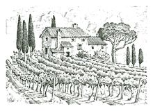 Rustic vineyard. rural landscape with houses. solar tuscany background. fields and cypress trees. harvesting and. Haystacks. engraved hand drawn in old sketch Royalty Free Stock Photo