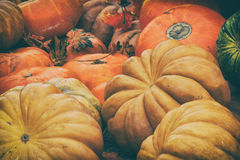 Rustic vintage background with Different pumpkins. Thanksgiving Day concept Royalty Free Stock Image