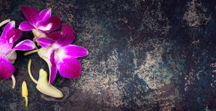 Rustic vintage background with pink orchid flowers Royalty Free Stock Photo