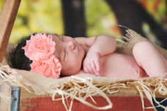 Rustic Wagon Newborn Royalty Free Stock Image