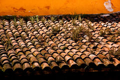 Rustic Weathered Roof Tiles. Weeds grow between weathered clay roof tiles of a Mexican hacienda royalty free stock image