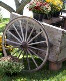 Rustic wheelbarrow with fall mums Stock Image