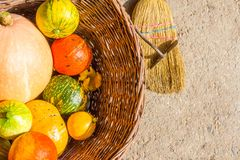 Rustic wicker basket pumpkins red green yellow orange and zucchini cultivar squash plant Cucurbita pepo fresh from the market for stock photography