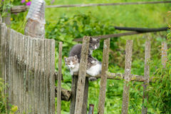 Rustic wild kittens Royalty Free Stock Photos