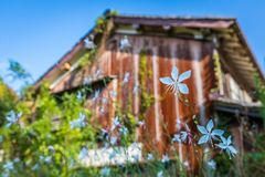 Rustic Wildflowers in Iwami Ginzan royalty free stock photos