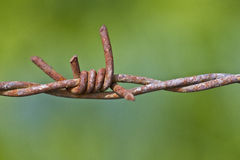 Rustic wire fence in green background. Closeup of barbed wire fench Royalty Free Stock Photo