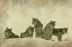 Rustic Wolf Pack Parchment. Hand painted illustration of a pack of wolves on rustic stone effect background with copy space above Stock Images