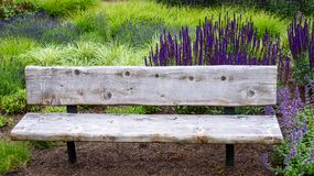 Rustic wood garden bench surrounded by ornamental grasses and the blooming purple flowers of salvia and catmint royalty free stock image