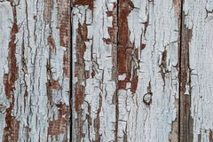 Rustic wood texture with cracked paint natural patterns surface as background. royalty free stock photography