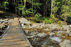 Rustic wooden bridge over a mountain stream Royalty Free Stock Photos